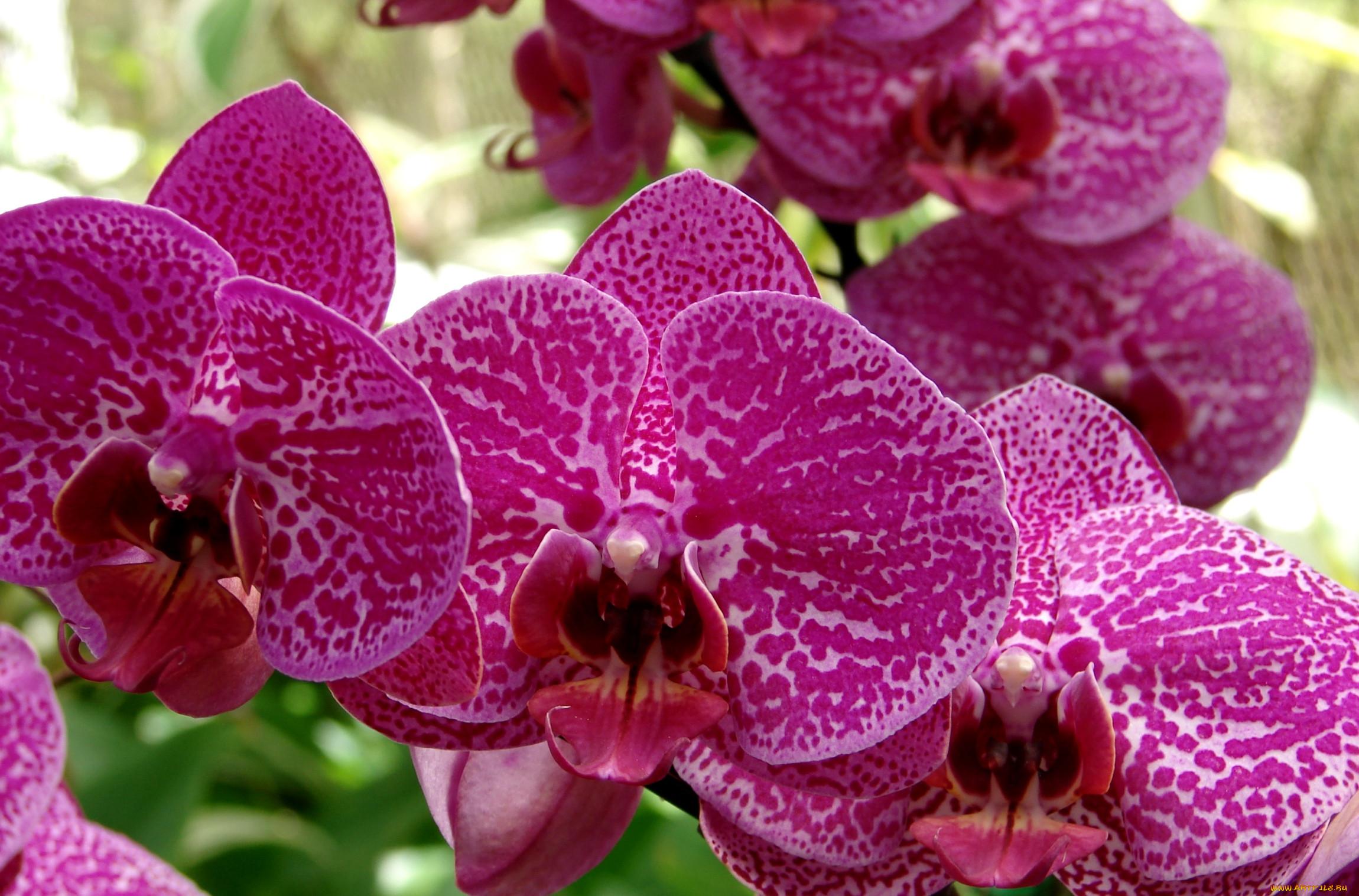 все картинки шикарные орхидеи цветы феодосии это незабываемые